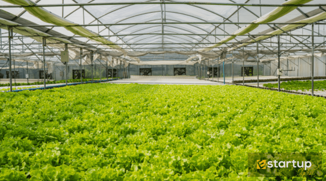 An Overview of Hydroponic Farming